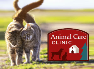 Animal Care clinic feature image with logo