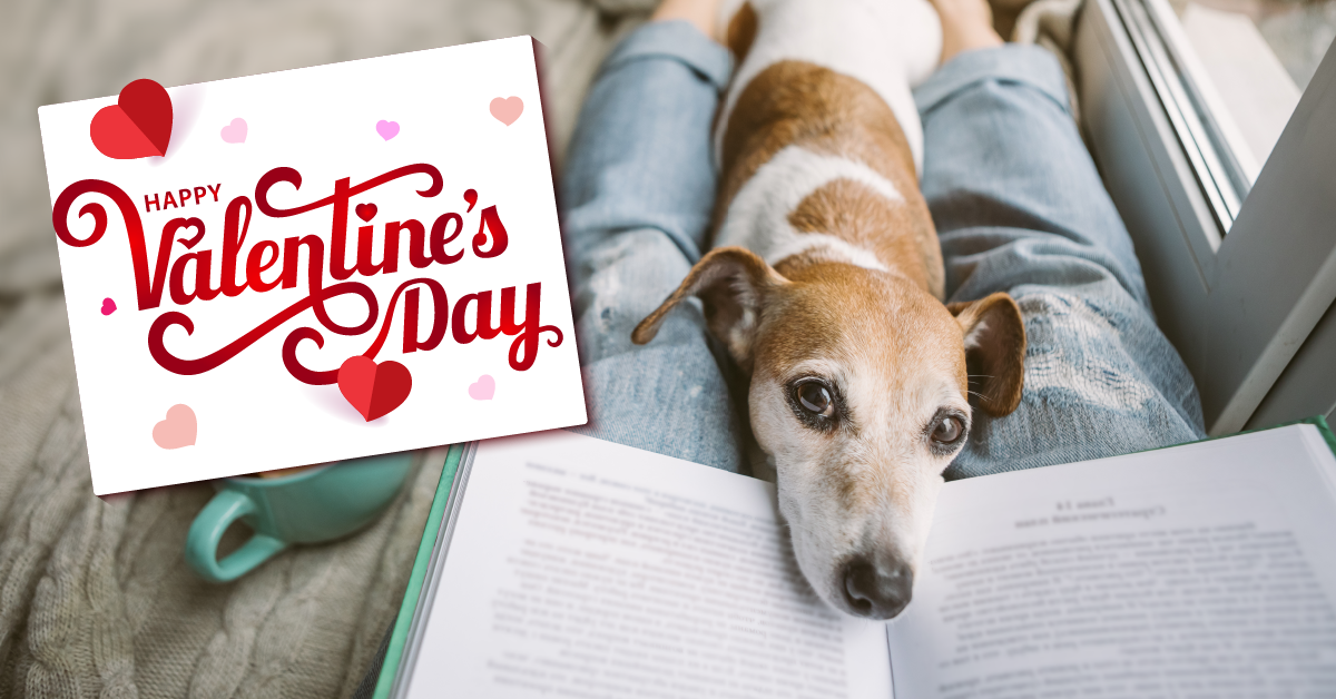 Animal Care Clinic happy valentine's day social media post with image of a puppy laying on a person's lap while they're reading