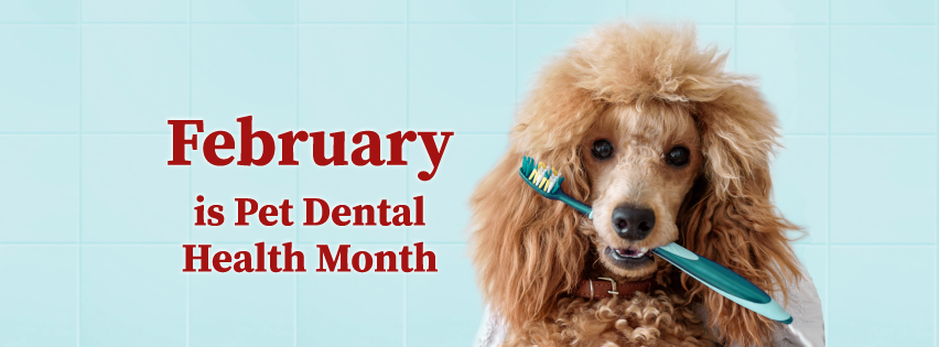 February is pet dental health month Facebook cover with image of a dog holding a toothbrush in its mouth