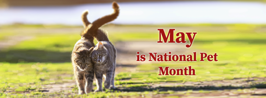 May is national pet month Facebook cover with image of two cats walking together