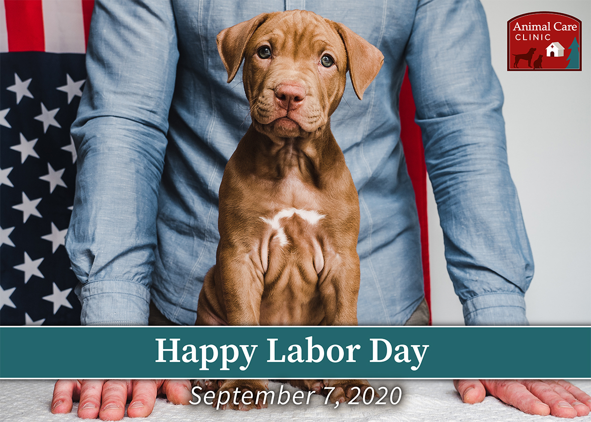 Animal Care Clinic Labor Day social media post with image of a puppy and person in front of an American flag