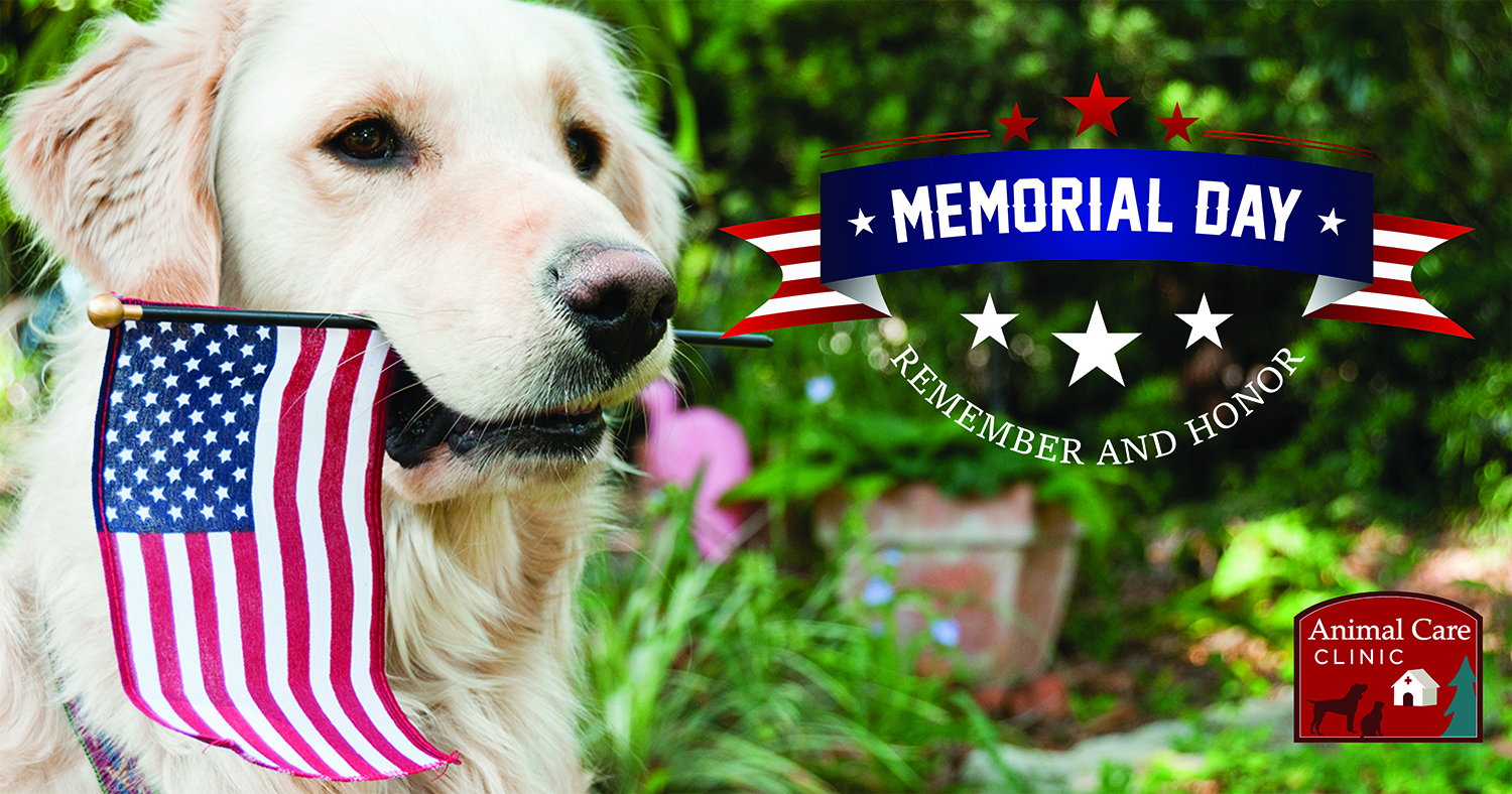 Animal Care Clinic Memorial Day social media post with image of a dog holding a United States of America flag in its mouth